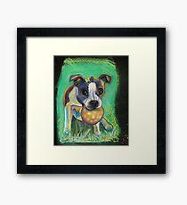 Boston Terrier with Ball Framed Print