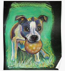 Boston Terrier with Ball Poster