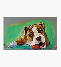 Bulldog with Red Ball Photographic Print