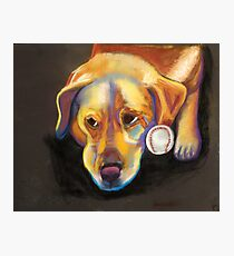 Golden Lab with Baseball Photographic Print