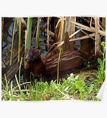 Mink in the Marsh (American Mink) Poster