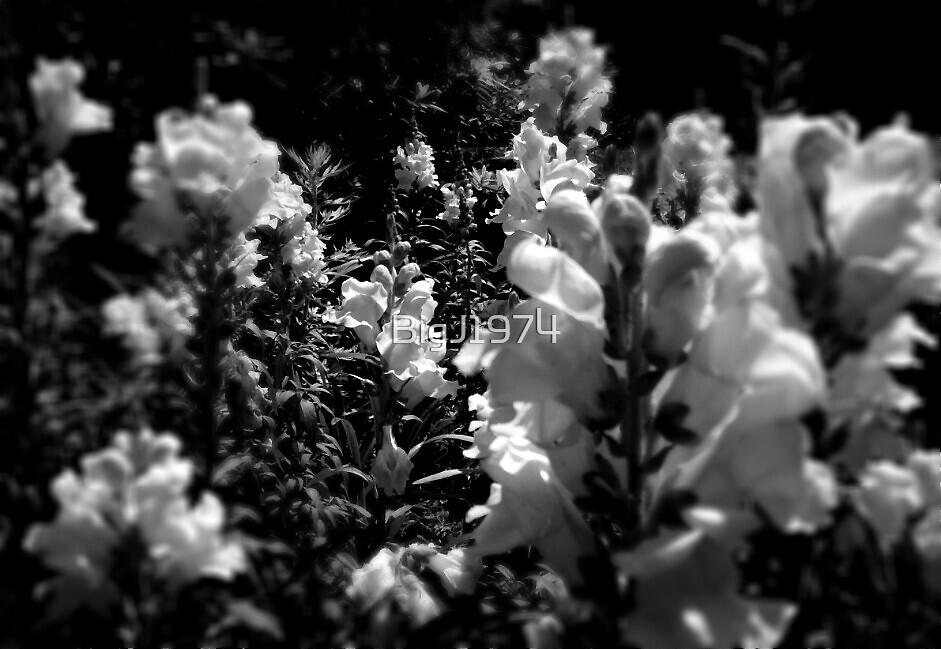 Florida flowers by BigJ1974
