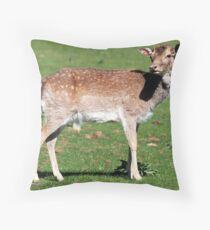 Fallow Deer, Calke Park Throw Pillow