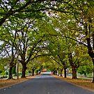 Yackandandah Autumn Series ~ High Street by Jane Keats