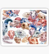 Skull Menagerie  Glossy Sticker