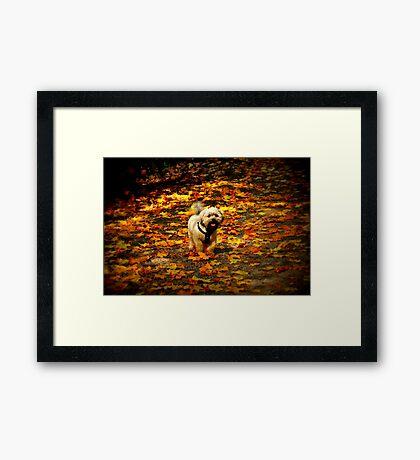Shades of Autumn Framed Print