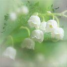 Fragrant beauty by aMOONy