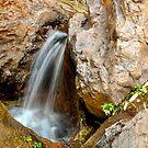 Zebedee Springs by Karina Walther