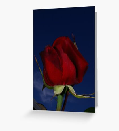 Evening Red Greeting Card