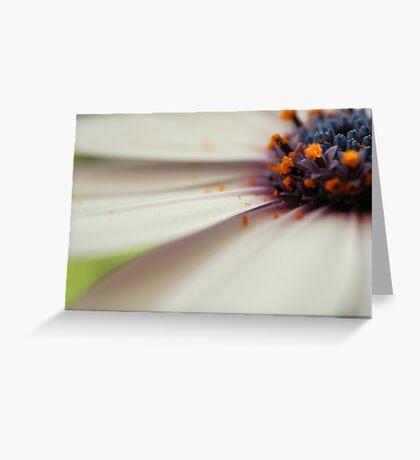 Cap daisy Greeting Card