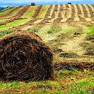 The Lonely Bale by Raider6569