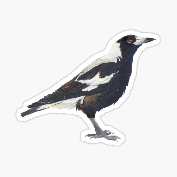 Australian Magpie - bird watercolour painting Sticker