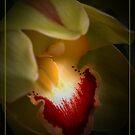 Pistacio Orchid by Aj Finan