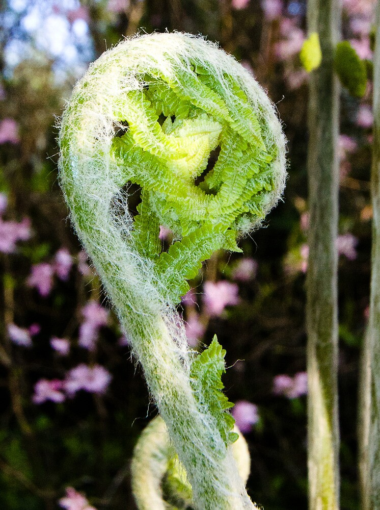 Fresh Fern Frond by Karen Kaleta