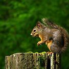 Squirrel by Tracy Friesen