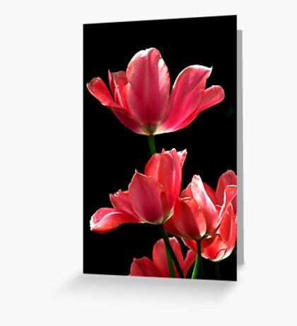 A Hot Pink Pirouette Greeting Card