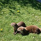 Otters at Knowlsey Safari Park, Uk by BevsDigitalArt