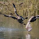The Hazards... of landing in a small pond. by DigitallyStill