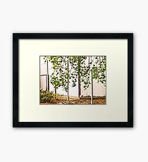 Nature As Abstract Framed Print