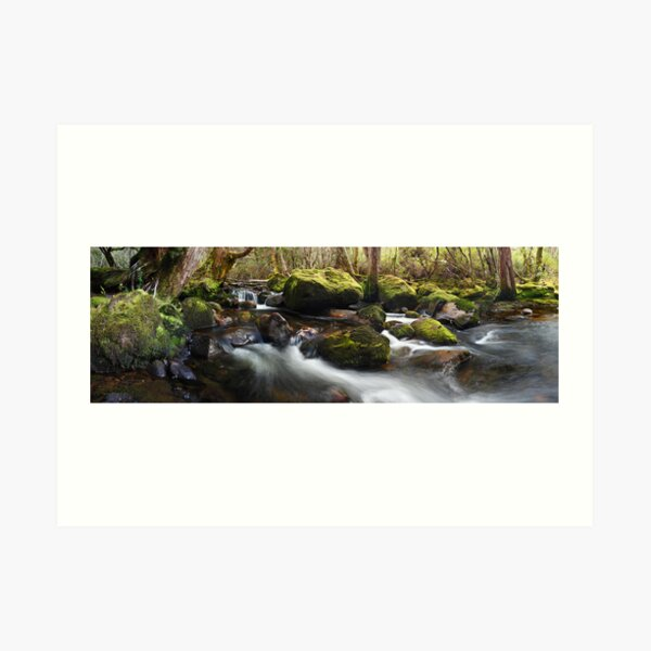 Pine Valley Stream, Lake St Clair National Park, Tasmania Art Print