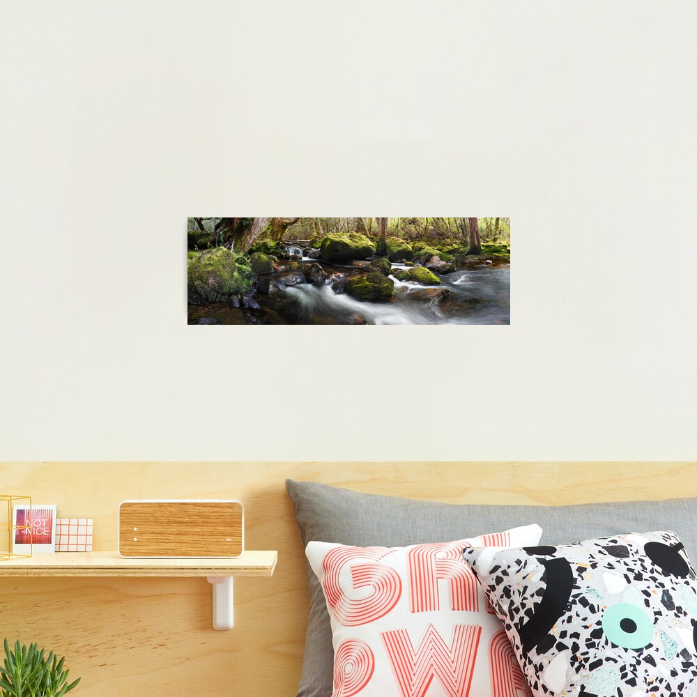 Pine Valley Stream, Lake St Clair National Park, Tasmania Photographic Print