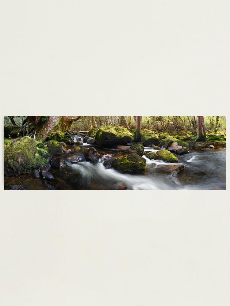 Alternate view of Pine Valley Stream, Lake St Clair National Park, Tasmania Photographic Print