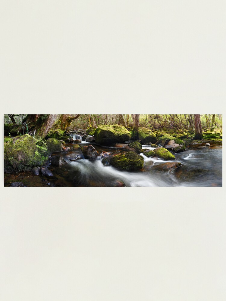 Alternate view of Pine Valley Stream, Lake St Clair National Park, Tasmania Photographic Print