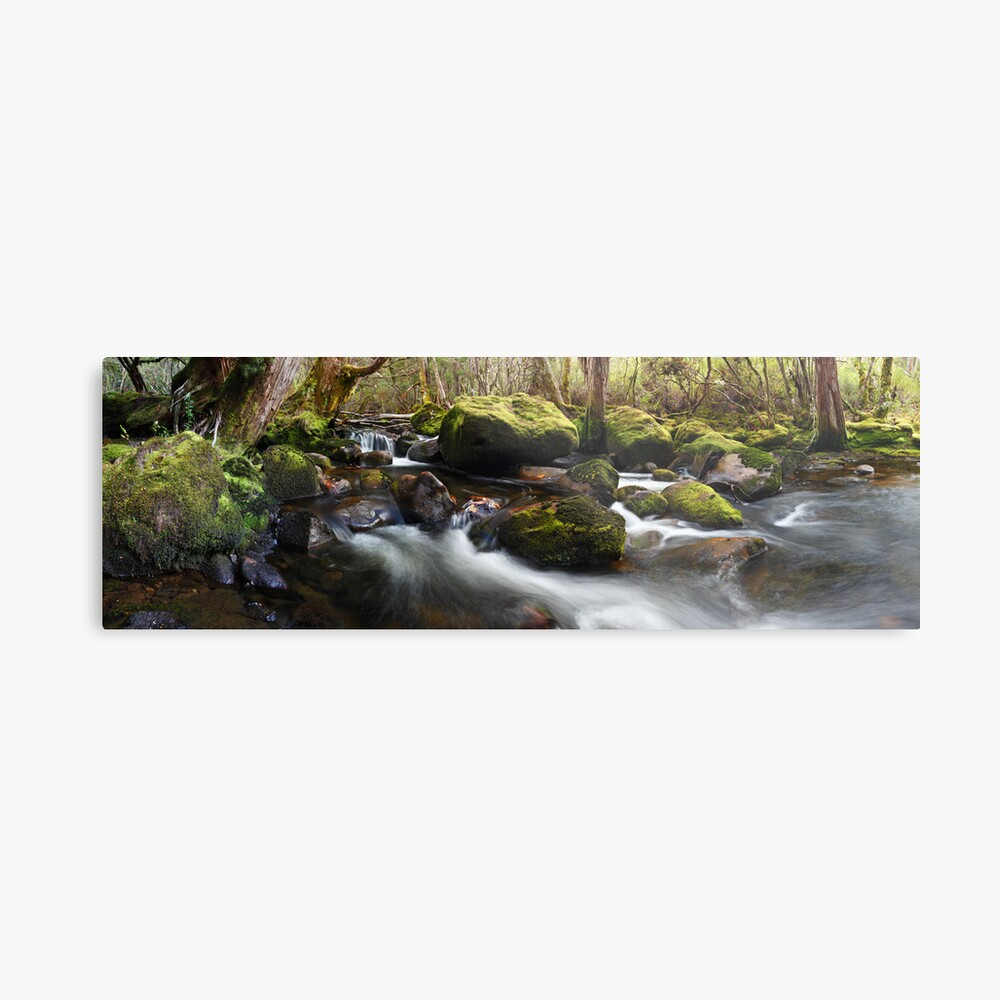 Pine Valley Stream, Lake St Clair National Park, Tasmania Metal Print