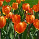 Outrageous Orange! by Lee d'Entremont