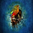 """Western Rosella"" by Heather Thorning"