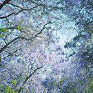 Jacaranda Canopy by RichCaspian