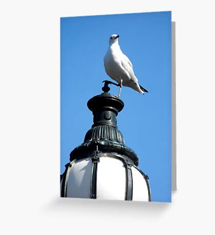 A Regal Bird Greeting Card