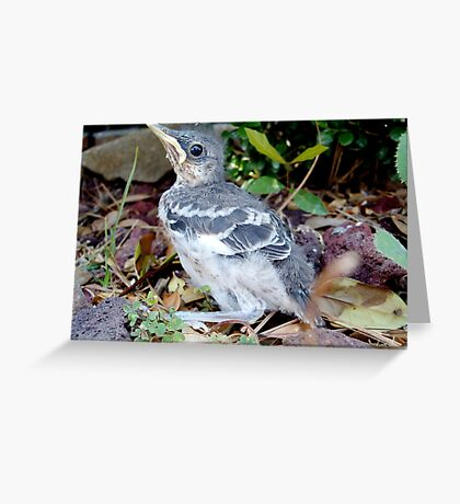 """Baby Bird in the Spring, Learning """"the ropes"""" Greeting Card"""