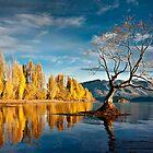 Wanaka Tree by Robert Dettman