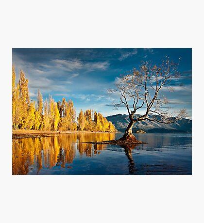 Wanaka Tree Photographic Print