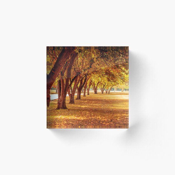 View of trees Acrylic Block