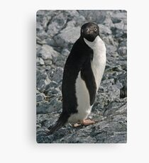 Adelie Penguin 4 Canvas Print