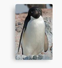 Adelie penguin 7 Canvas Print