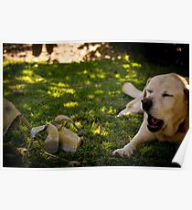 Chatting Labradors? Poster