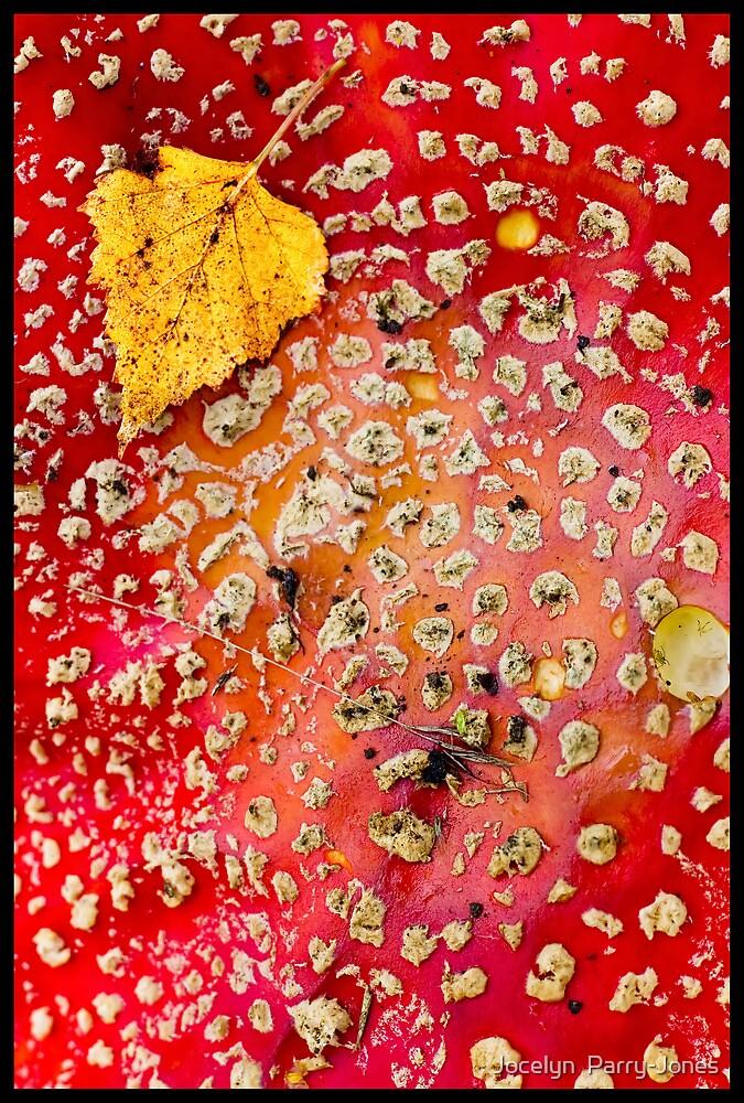 On top of a mushroom by Jocelyn  Parry-Jones