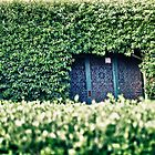 Behind the hedge by Adriano Carrideo