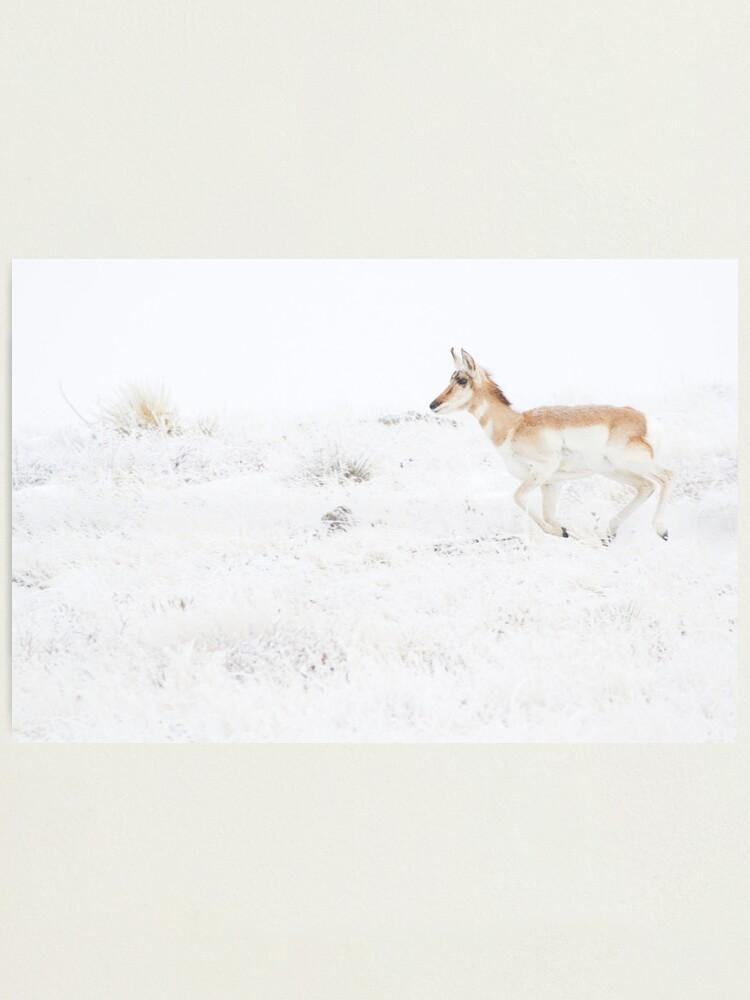 Alternate view of Panic... Catch The Herd Photographic Print