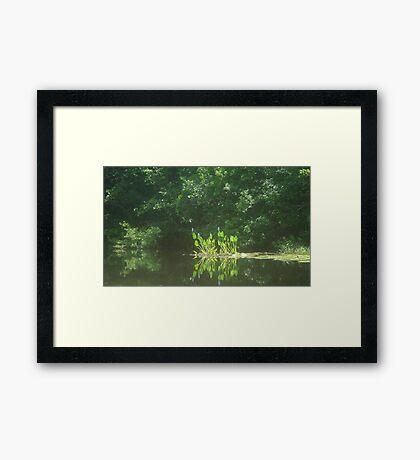 PICKEREL WEED ISLAND Framed Print