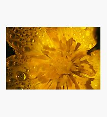 butter cup dropletts  Photographic Print