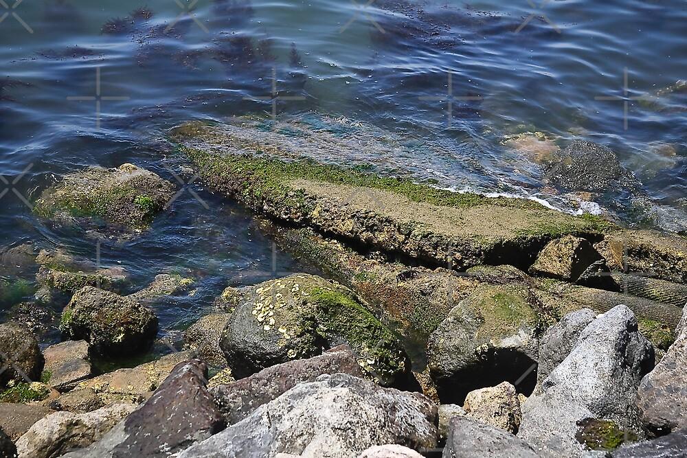 Living Ocean Rocks by Heather Friedman