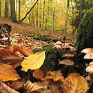 Autumn leaves and fungi by Jane Corey