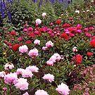 English Garden, Border, UK. by johnrf