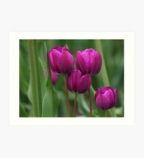 Grouped For Spring! Featured Photo Art Print