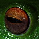 Eye Of The Frog by naturalnomad
