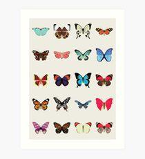 Schmetterlinge Kunstdruck